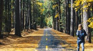 wandern-road